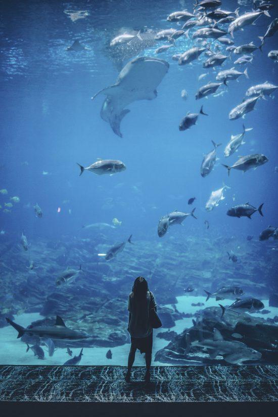 National Aquarium Denmark, Den Blå Planet